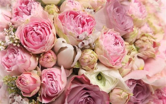 壁纸 粉红色的花朵,美丽的玫瑰,浪漫