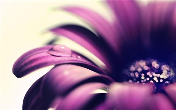 Fond d'écran Pétales de fleurs pourpres close-up, la goutte d'eau