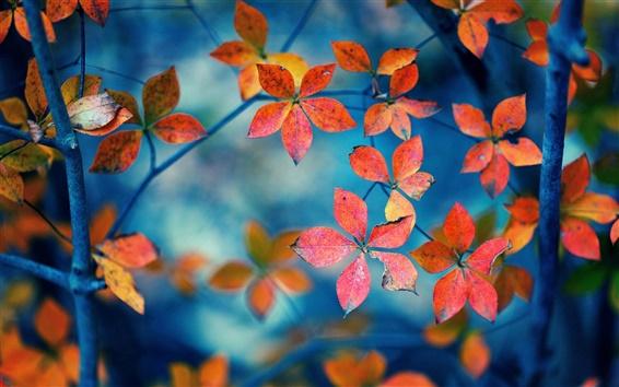 Fond d'écran Les feuilles rouges, branches, automne