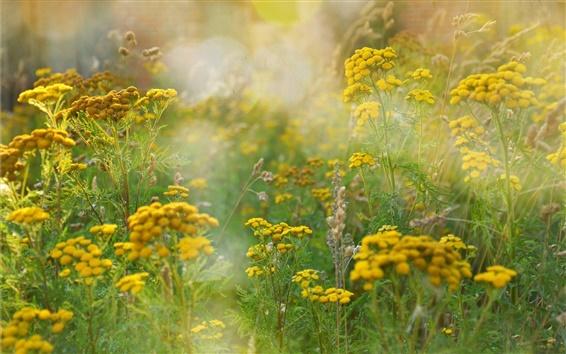 Papéis de Parede Campos do verão, grama, flores amarelas, brilho