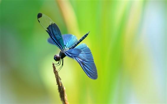 Papéis de Parede Galho, libélula azul