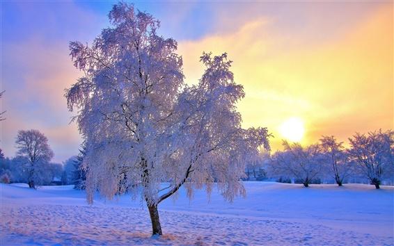 Fond d'écran Arbres de neige de l'hiver, le gel, le ciel, le soleil, brouillard