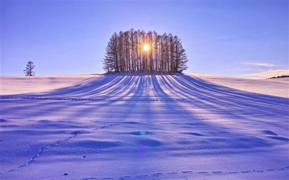 Обои Зимний снег, деревья, солнечные лучи, белый