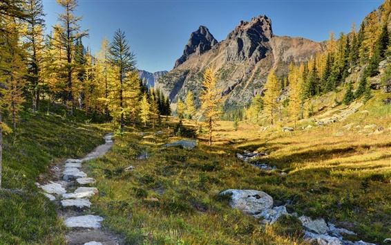 Wallpaper Yoho National Park, Canada, mountains, trees, walking paths