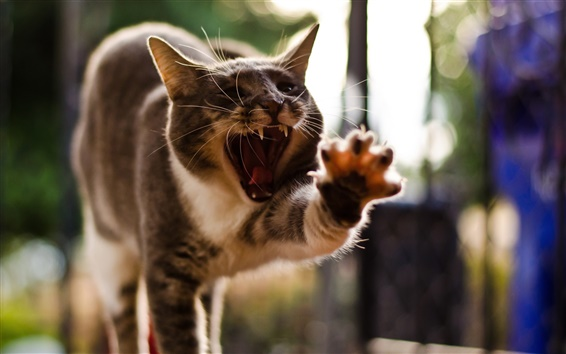 Wallpaper Cat funny posture, yawning, paw