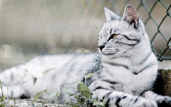 Fond d'écran Côté de regard de chat, moustache, arrière-plan flou