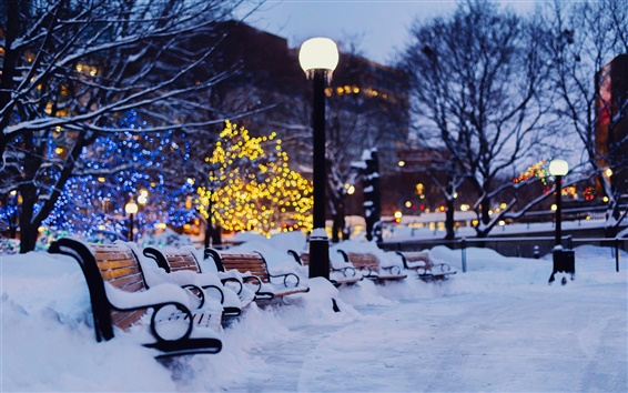 Wallpaper City, night, winter, snow, bench, garden, lights