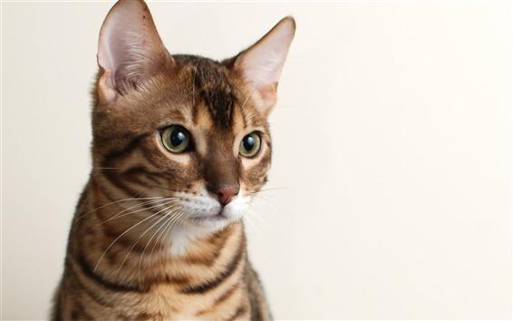 Papéis de Parede Olhar bonito gatinho