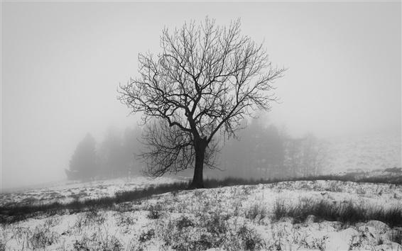 Wallpaper England winter, nature snow, tree, fog