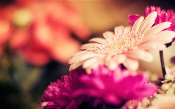 Papéis de Parede Foco flores gérbera, pétalas, fotografia borrão