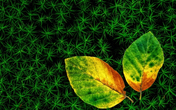 Wallpaper Grass, two leaves, autumn