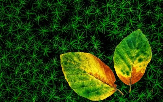 Fond d'écran Herbe, deux feuilles, l'automne