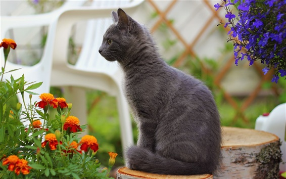 Wallpaper Gray cat standing, orange blue flowers