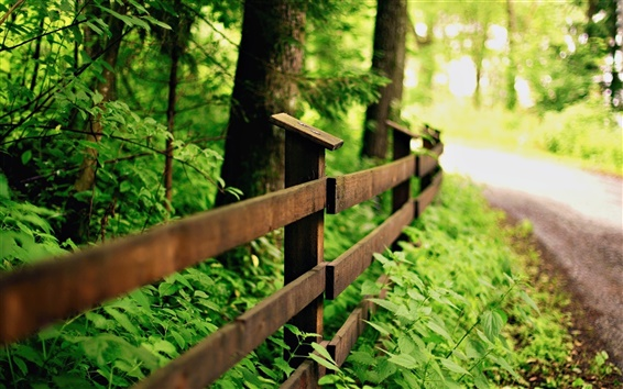 Wallpaper Green nature, road, wood fence