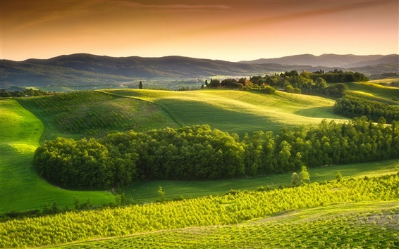Wallpaper Italy, Tuscany, countryside, green nature, trees, fields, sky