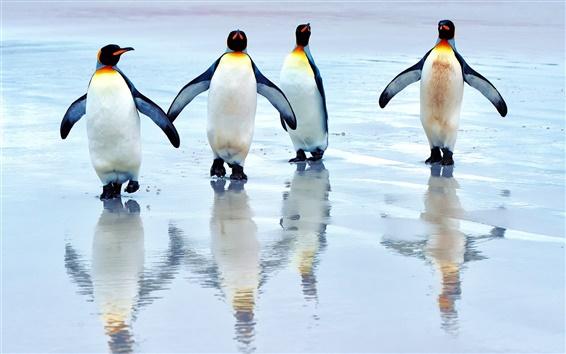 Wallpaper King penguins walking on the beach, sea