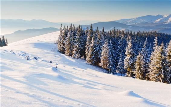 Обои Природа зима, снег, сосны, лес