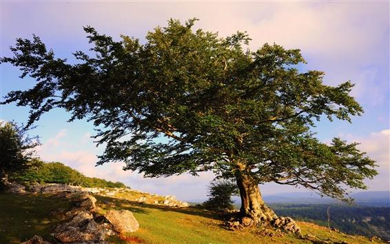 Обои Одно дерево на горе, лето