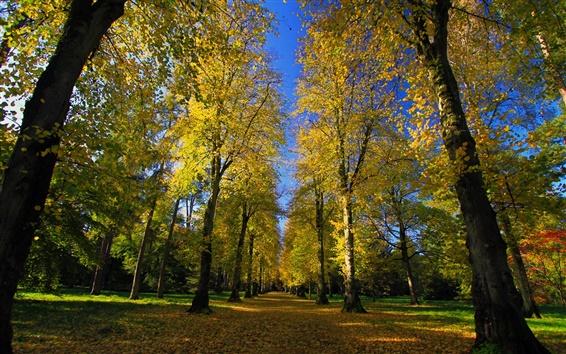 壁紙 公園、植物園、道路、路地、秋、サンシャイン