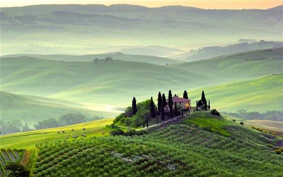 Fond d'écran Pienza, Toscane, Italie, paysages de printemps, les champs, les arbres, matin, brouillard, vert