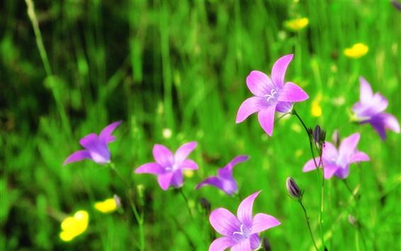 Papéis de Parede Flor de sino roxo