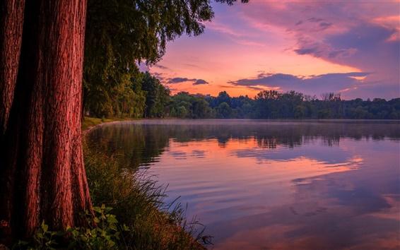 Wallpaper Purple dusk, forest, lake