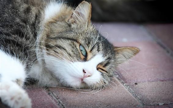 Papéis de Parede gato sonolento