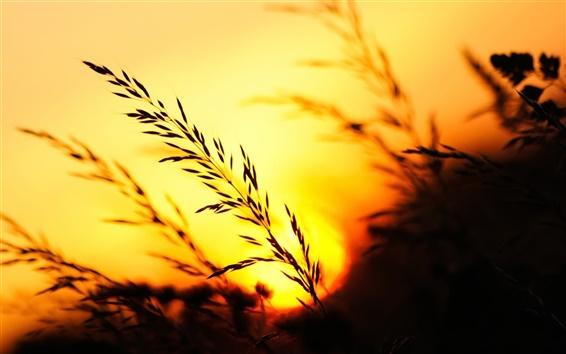 Обои Закат, трава, вечер