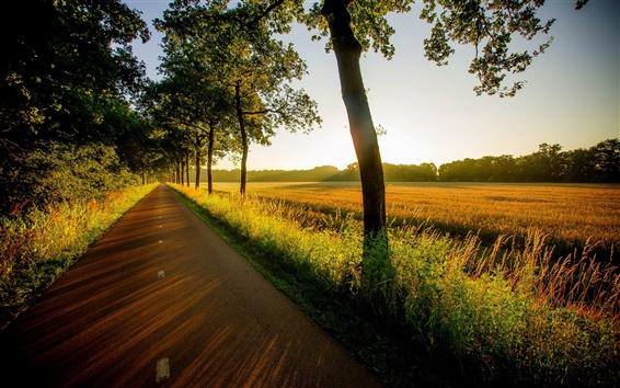 Обои Деревья, дорога, закат, трава, лес, поля