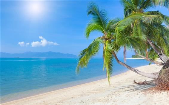Fond d'écran Plage tropicale, cocotier, mer, ciel, nuages, soleil