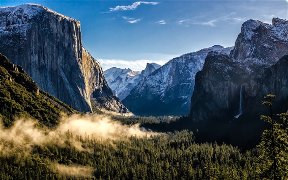 Wallpaper USA, California, Yosemite National Park, mountains, forest, fog