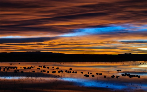 Wallpaper USA, New Mexico, preserve, lake, birds, dawn, sky, clouds