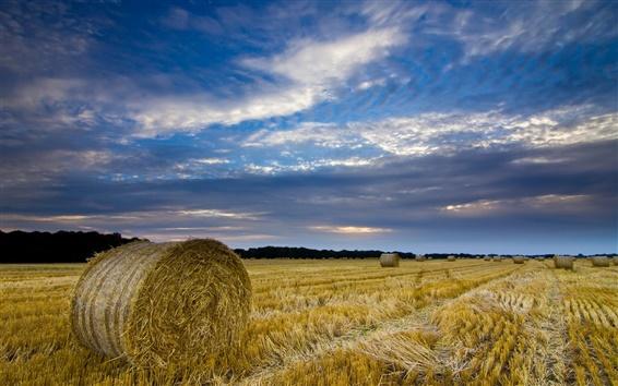 Обои Великобритания, Англия, Норфолк, сельская местность, поле, солома, сено, голубое небо