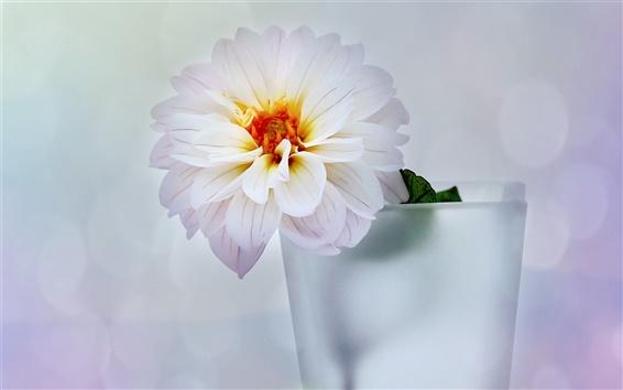 Wallpaper Vase, flower, dahlia, white style