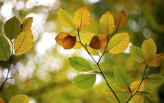 Papéis de Parede Outono, folhas, Borrão, bokeh