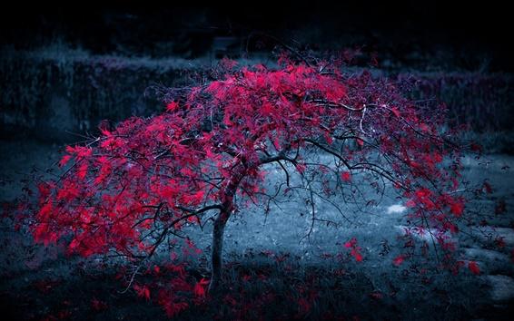 Fondos de pantalla Otoño árbol solitario, hojas rojas, atardecer