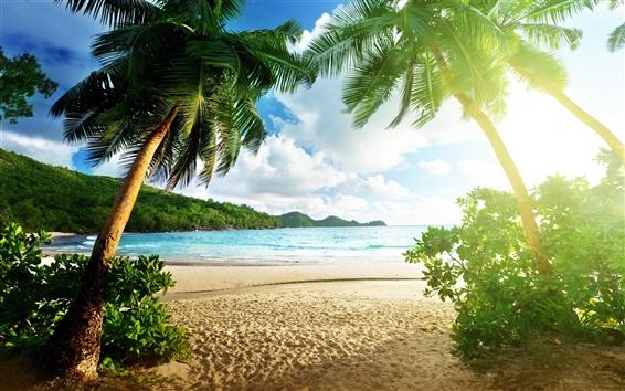 壁紙 ビーチの風景、島、海、ヤシの木、空、雲