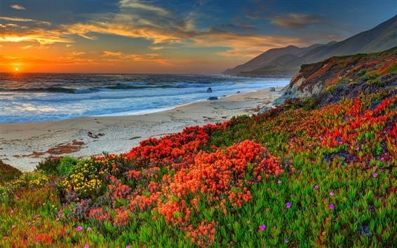 Wallpaper Beach, sunset, sky, clouds, sands, flowers