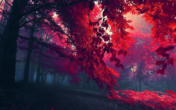 Wallpaper Beautiful forest trees, branches, red leaves, autumn