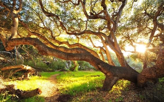 Papéis de Parede Grandes árvores, grama, manhã, arbustos, nascer do sol