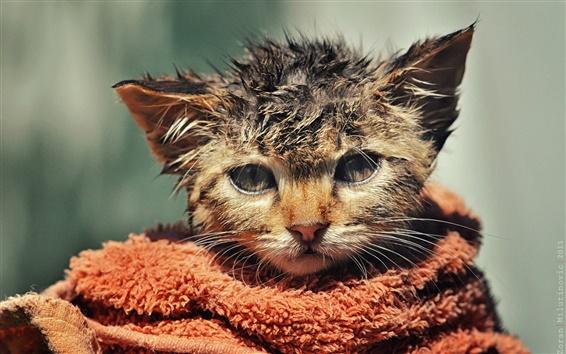 배경 화면 귀여운 새끼 고양이, 흐트러진, 젖은 수건,