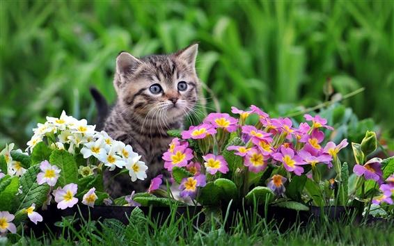 Papéis de Parede Gatinho bonito, flores brancas e roxas