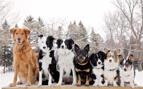 Обои Собаки друзья, зима