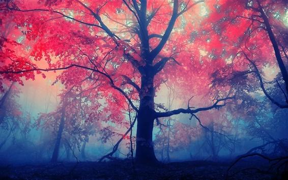 Fondos de pantalla Los árboles del bosque, hojas del rojo, niebla, niebla