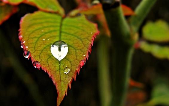 Wallpaper Green leaf, water drop, blur