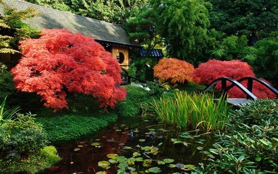 壁紙 日本の風景、庭園、池