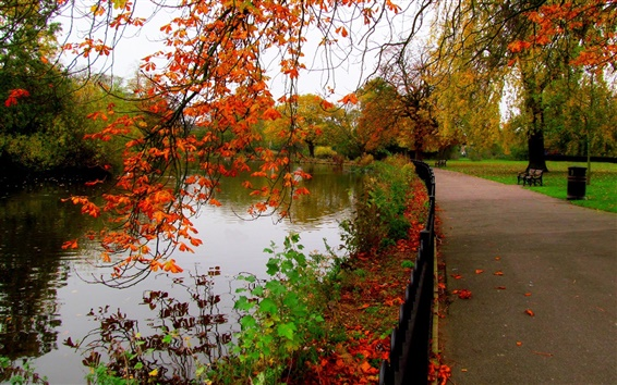 Wallpaper Leaves, park, trees, forest, autumn, walk, river