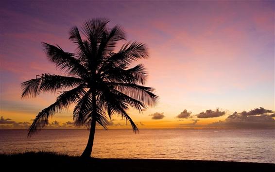 Papéis de Parede Natureza, palmeira, praia, mar, céu, sol, silhueta