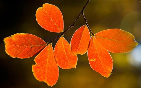 Papéis de Parede Natureza, árvore, folhas de outono vermelhas