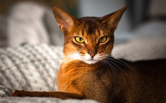 Обои Оранжевый кот в облике комнатной